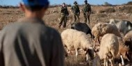 """مستوطنون يطاردون الرعاة في خلة """"حمد"""" بالأغوار الشمالية"""