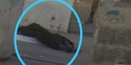 استشهاد فتاة برصاص الاحتلال قرب حاجز الزعيم شرق القدس