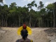 غابات الأمازون تشهد أكبر أزمة تصحر بعهد بولسونارو