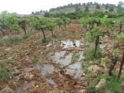 مستوطنون يغرقون مزارع العنب بالمياه العادمة في بيت أمر شمال الخليل
